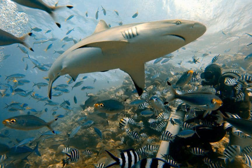 Shark diving GoPro
