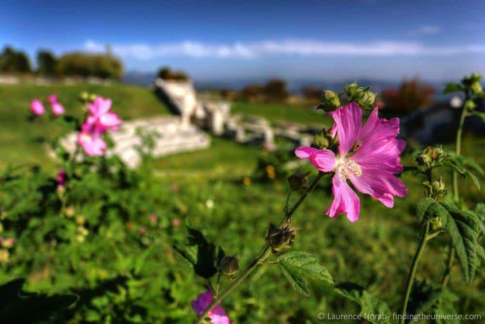 Flower shot at 17mm