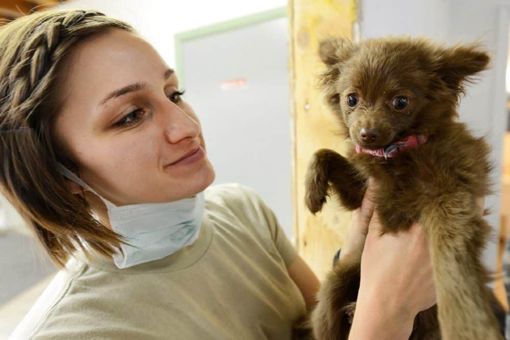 Puppy and vet