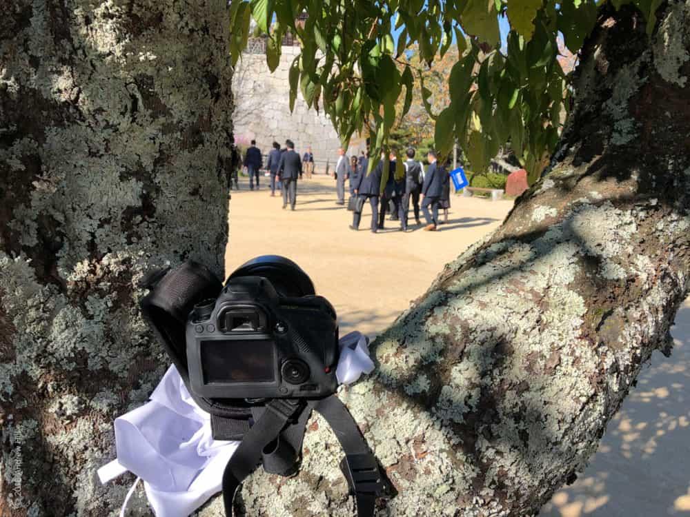 Matsuyama-camera in tree