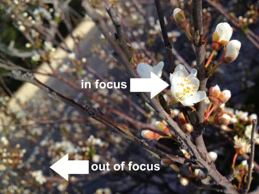 In focus vs out of focus